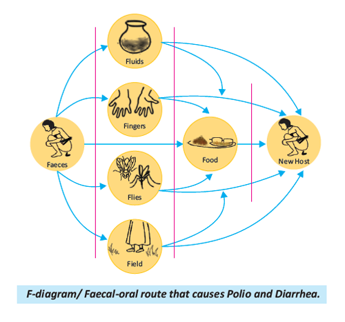 F-diagram/ Faecal-oral route that causes Polio and Diarrhoea